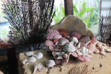 Mermaid Cave Shells
